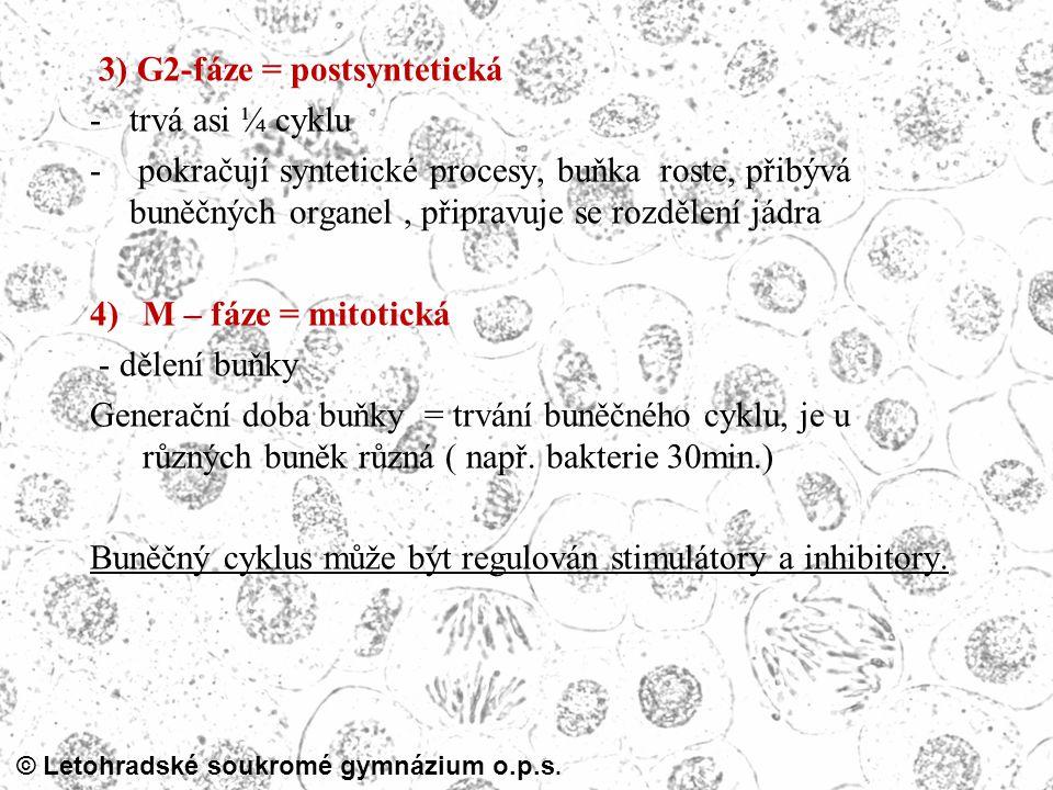 © Letohradské soukromé gymnázium o.p.s. 3) G2-fáze = postsyntetická -trvá asi ¼ cyklu - pokračují syntetické procesy, buňka roste, přibývá buněčných o
