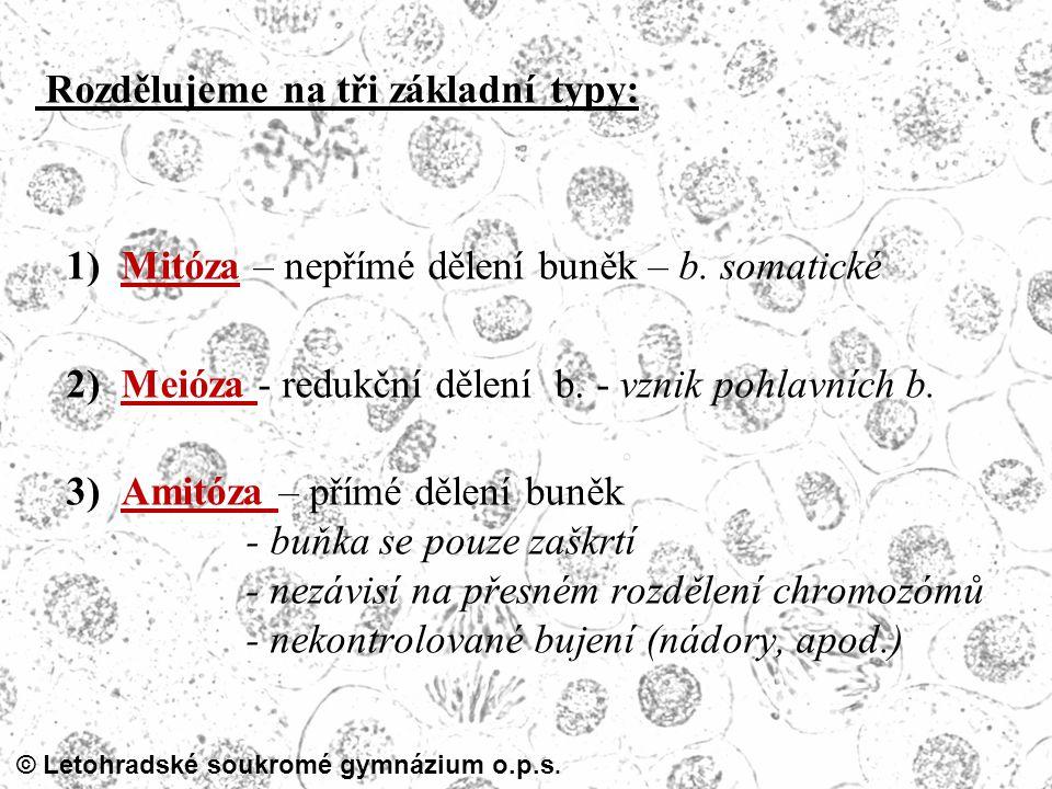 © Letohradské soukromé gymnázium o.p.s. Rozdělujeme na tři základní typy: 1) Mitóza – nepřímé dělení buněk – b. somatické 2) Meióza - redukční dělení