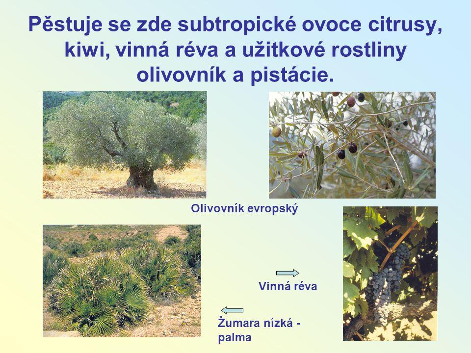 Pěstuje se zde subtropické ovoce citrusy, kiwi, vinná réva a užitkové rostliny olivovník a pistácie. Olivovník evropský Žumara nízká - palma Vinná rév