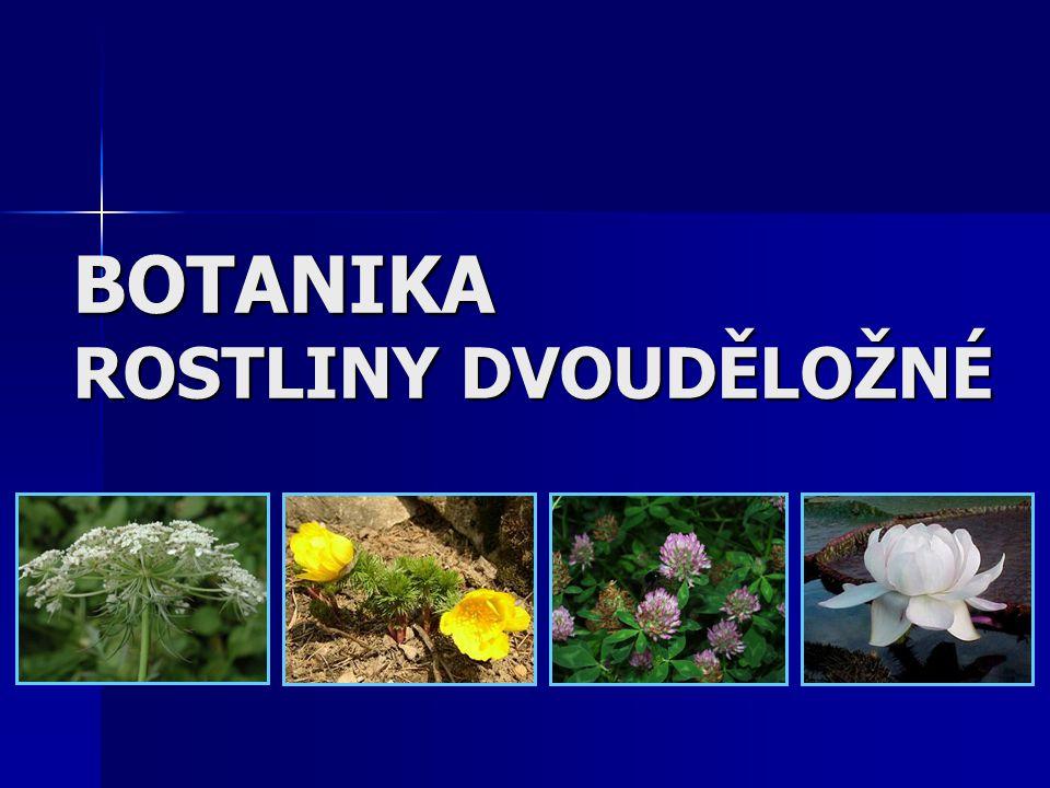 SOŠS a SOU KadaňBotanika - Dvouděložné rostliny41 Čeleď: Hluchavkovité Byliny, polokeře, vzácně i keře nebo stromy.