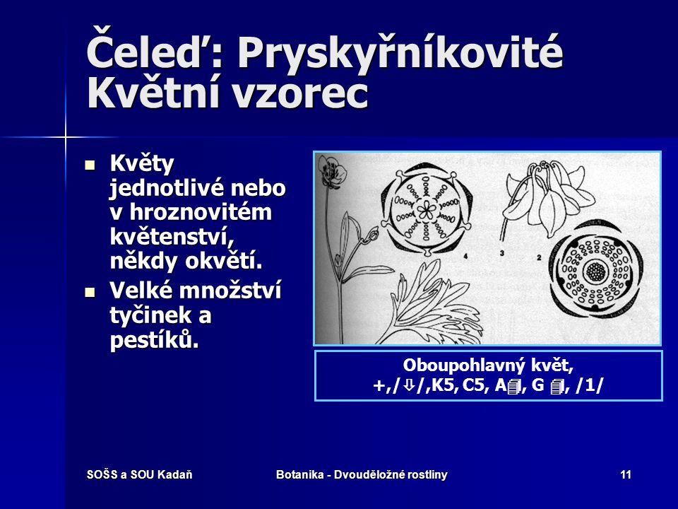SOŠS a SOU KadaňBotanika - Dvouděložné rostliny10 Čeleď: Pryskyřníkovité Květní diagram Květní diagram Pryskyřník prudkýOrlíček hajní