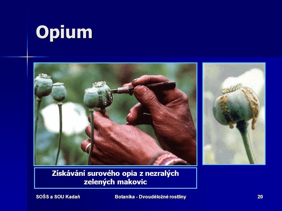 SOŠS a SOU KadaňBotanika - Dvouděložné rostliny19 Mák – opium – heroin První požití heroinu může vyvolat pocity na zvracení, zvracení samotné a bolest