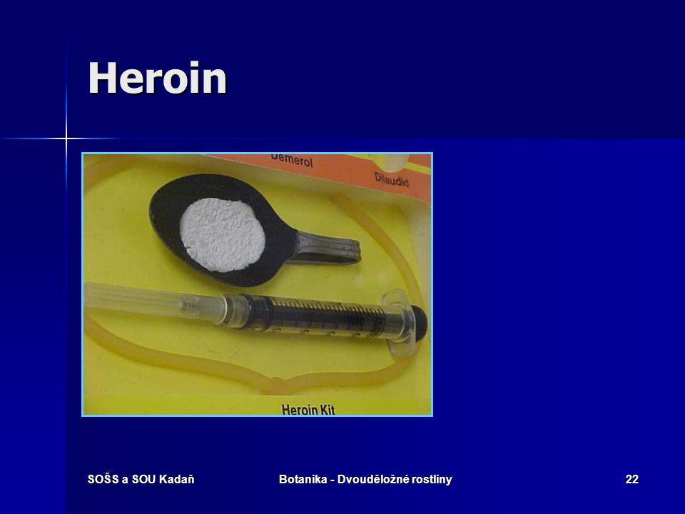 SOŠS a SOU KadaňBotanika - Dvouděložné rostliny21 Kuřáci opia Morfin je nejdů- ležitějším a také nejúčinnějším alkaloidem opia. Morfin je nejdů- ležit