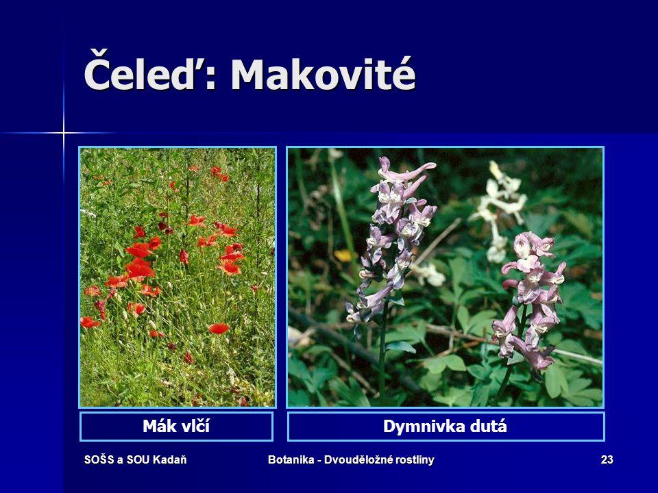 SOŠS a SOU KadaňBotanika - Dvouděložné rostliny22 Heroin