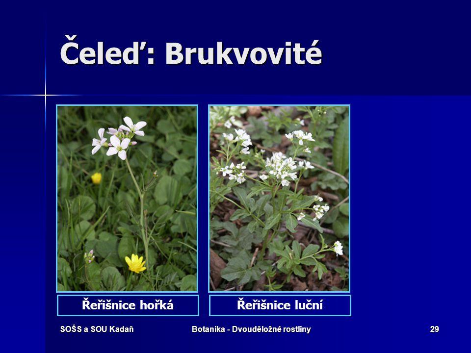SOŠS a SOU KadaňBotanika - Dvouděložné rostliny28 Čeleď: Brukvovité Brukev řepka olejkaČesnáček lékařský