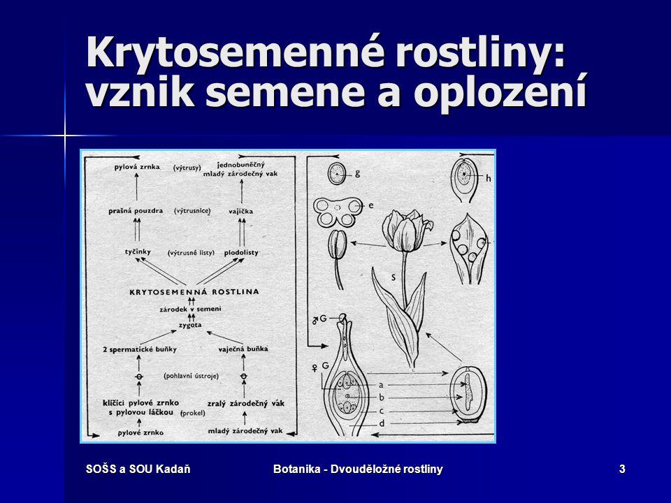 SOŠS a SOU KadaňBotanika - Dvouděložné rostliny2 Systém rostlin Říše: rostliny Říše: rostliny –Podříše: Vyšší rostliny Oddělení: Krytosemenné Oddělení
