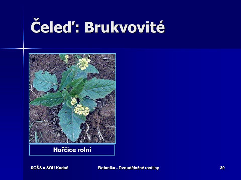 SOŠS a SOU KadaňBotanika - Dvouděložné rostliny29 Čeleď: Brukvovité Řeřišnice hořkáŘeřišnice luční
