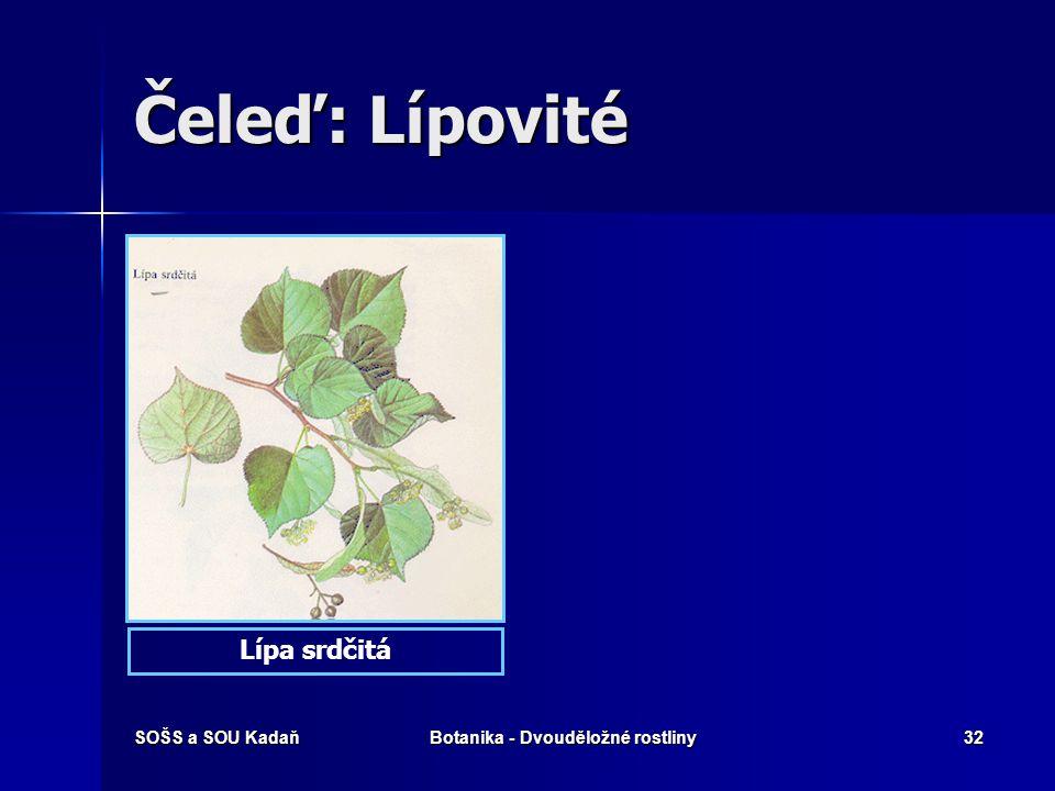 SOŠS a SOU KadaňBotanika - Dvouděložné rostliny31 Čeleď: Lípovité Hmyzosnubné dřeviny. Hmyzosnubné dřeviny. Plod: nažka. Plod: nažka. Květy: oboupohla