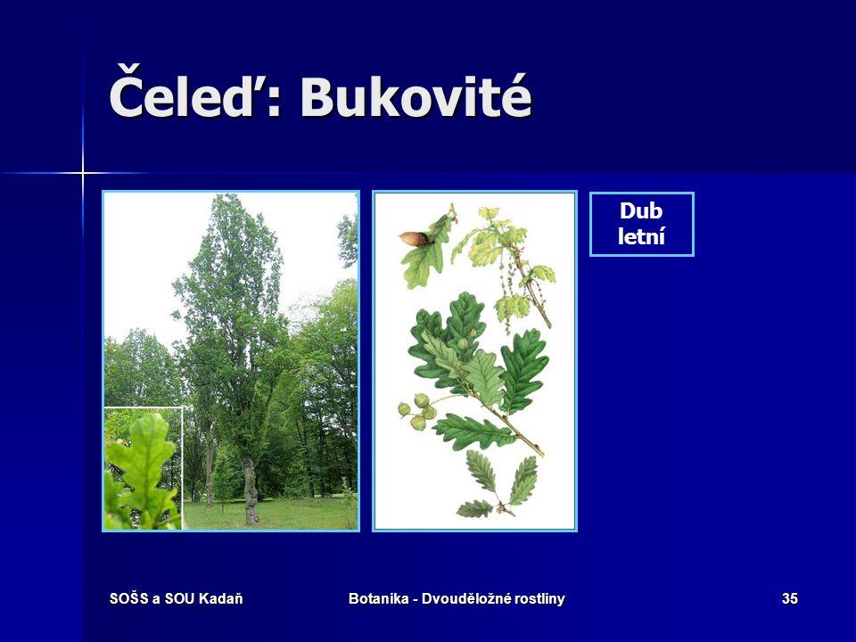 SOŠS a SOU KadaňBotanika - Dvouděložné rostliny34 Čeleď: Bukovité Buk lesní