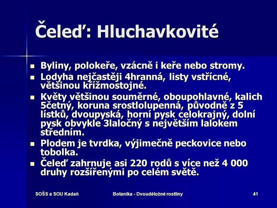 SOŠS a SOU KadaňBotanika - Dvouděložné rostliny40 Čeleď: Břízovité Olše lepkavá