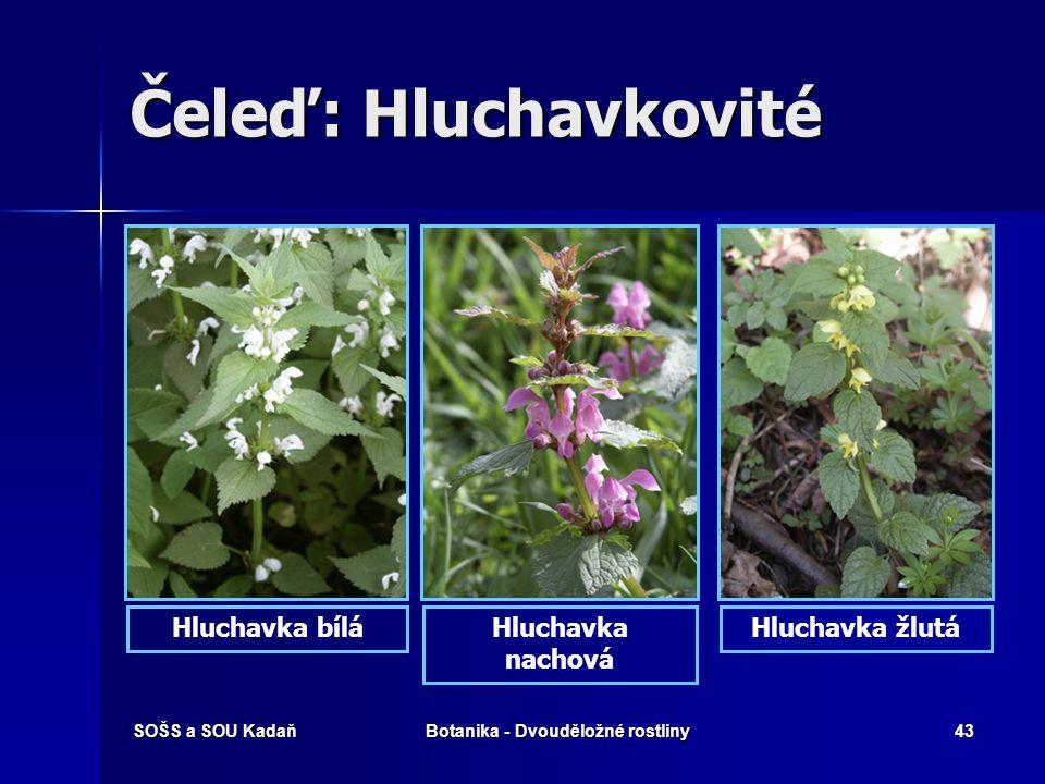 SOŠS a SOU KadaňBotanika - Dvouděložné rostliny42 Čeleď: Hluchavkovité Dobromysl obecná Bukvice lékařská
