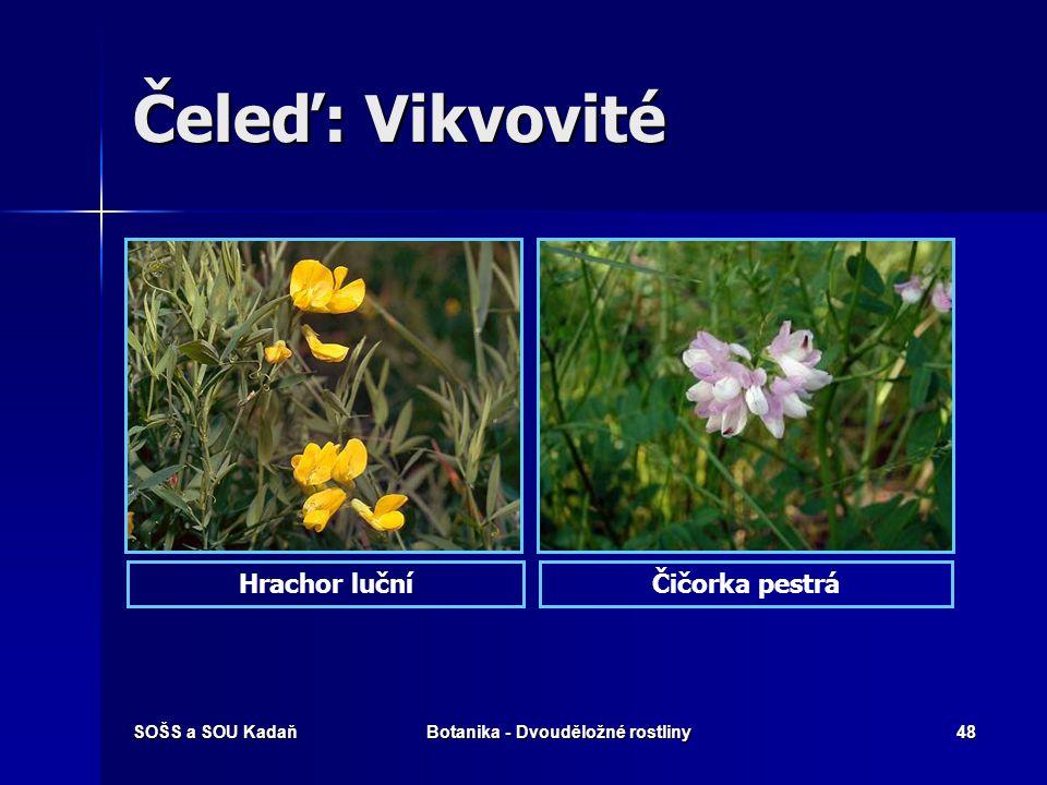 SOŠS a SOU KadaňBotanika - Dvouděložné rostliny47 Čeleď: Vikvovité Stavba květu K (5) C 5 A (9) + 1 n. (10) G 1 K (5) C 5 A (9) + 1 n. (10) G 1