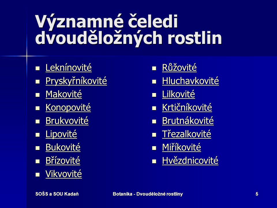 SOŠS a SOU KadaňBotanika - Dvouděložné rostliny55 Čeleď: Brutnákovité Drsně chlupaté, jednoleté až vytrvalé byliny.