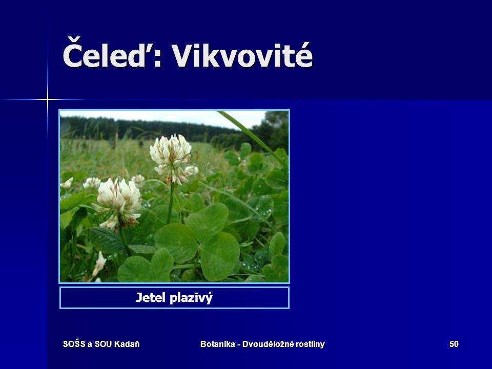 SOŠS a SOU KadaňBotanika - Dvouděložné rostliny49 Čeleď: Vikvovité Jetel podhorníJetel luční