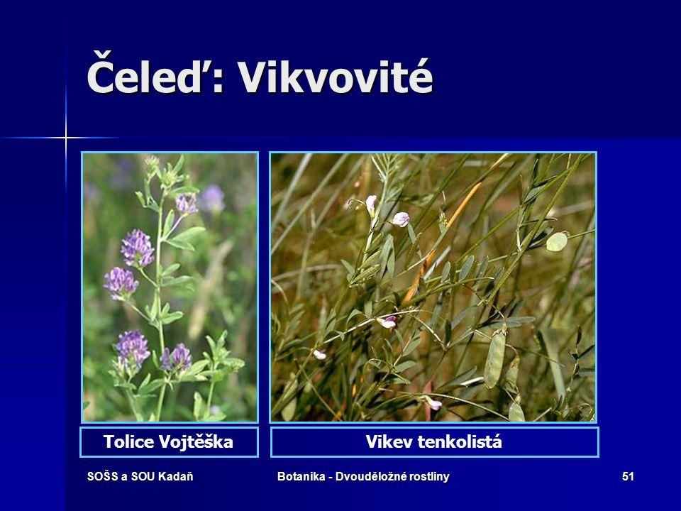 SOŠS a SOU KadaňBotanika - Dvouděložné rostliny50 Čeleď: Vikvovité Jetel plazivý