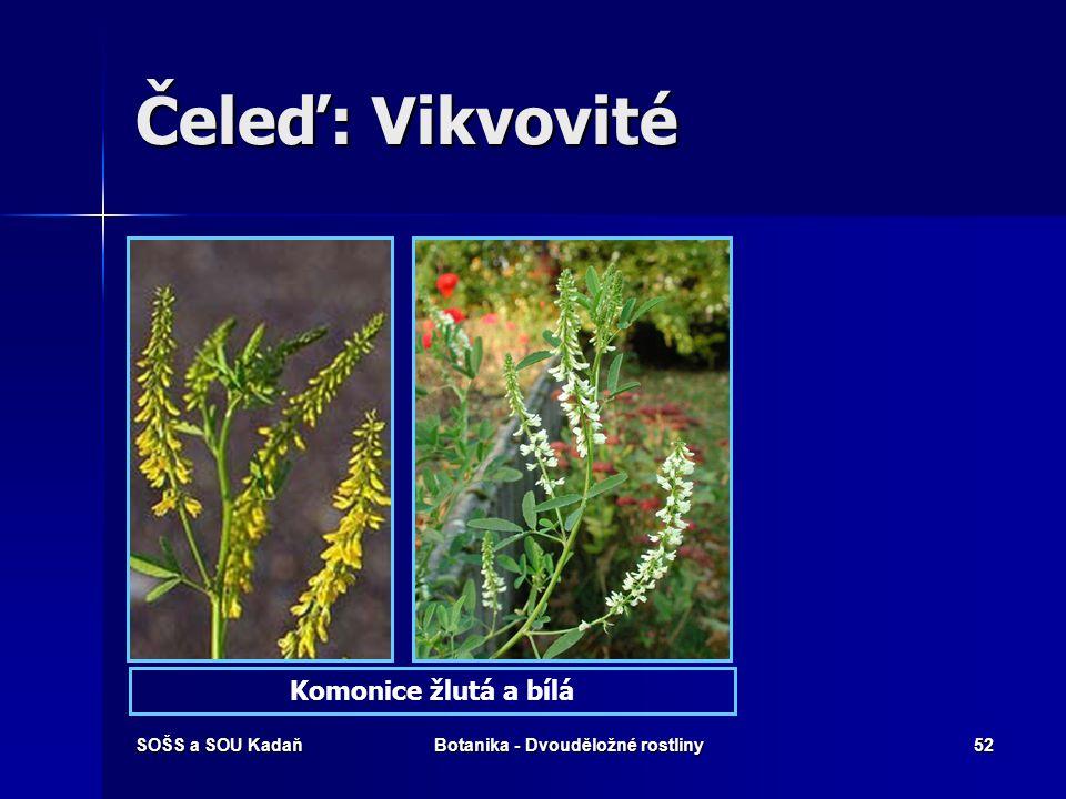 SOŠS a SOU KadaňBotanika - Dvouděložné rostliny51 Čeleď: Vikvovité Tolice VojtěškaVikev tenkolistá
