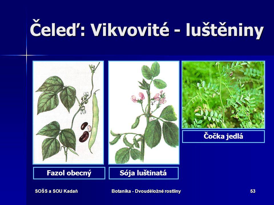 SOŠS a SOU KadaňBotanika - Dvouděložné rostliny52 Čeleď: Vikvovité Komonice žlutá a bílá