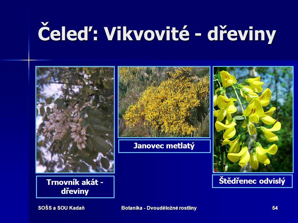 SOŠS a SOU KadaňBotanika - Dvouděložné rostliny53 Čeleď: Vikvovité - luštěniny Fazol obecný Čočka jedlá Sója luštinatá