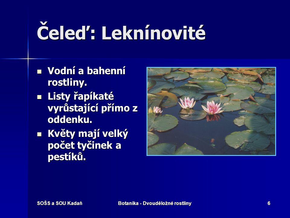 SOŠS a SOU KadaňBotanika - Dvouděložné rostliny6 Čeleď: Leknínovité Vodní a bahenní rostliny.