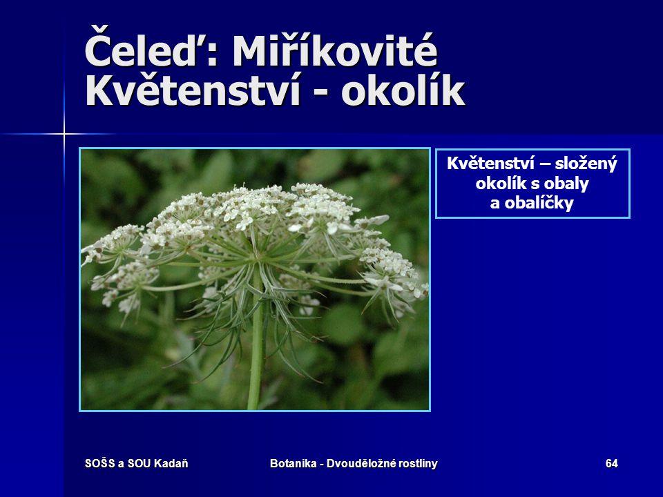 SOŠS a SOU KadaňBotanika - Dvouděložné rostliny63 Čeleď: Miříkovité Květy uspořádány v okolících, častěji však složených okolících. Pod květenstvím je