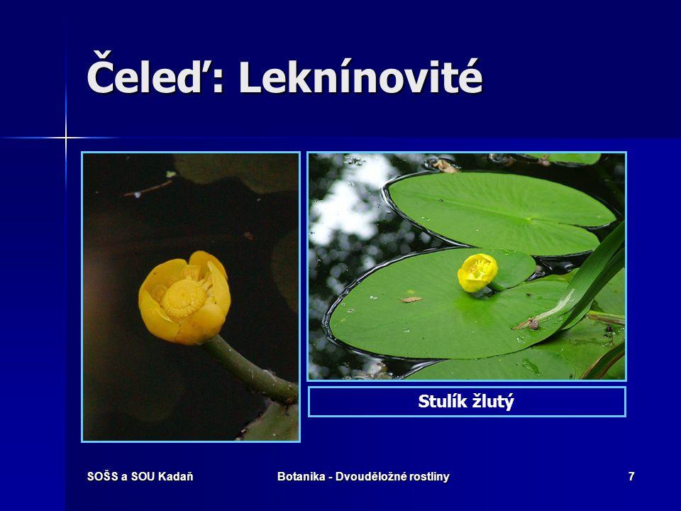 SOŠS a SOU KadaňBotanika - Dvouděložné rostliny6 Čeleď: Leknínovité Vodní a bahenní rostliny. Vodní a bahenní rostliny. Listy řapíkaté vyrůstající pří