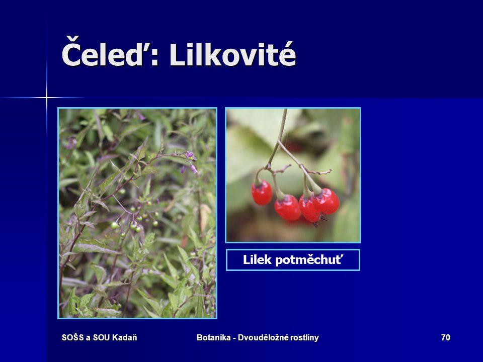 SOŠS a SOU KadaňBotanika - Dvouděložné rostliny69 Čeleď: Lilkovité Jednoleté, dvouleté nebo vytrvalé byliny, polokeře nebo keře. Jednoleté, dvouleté n