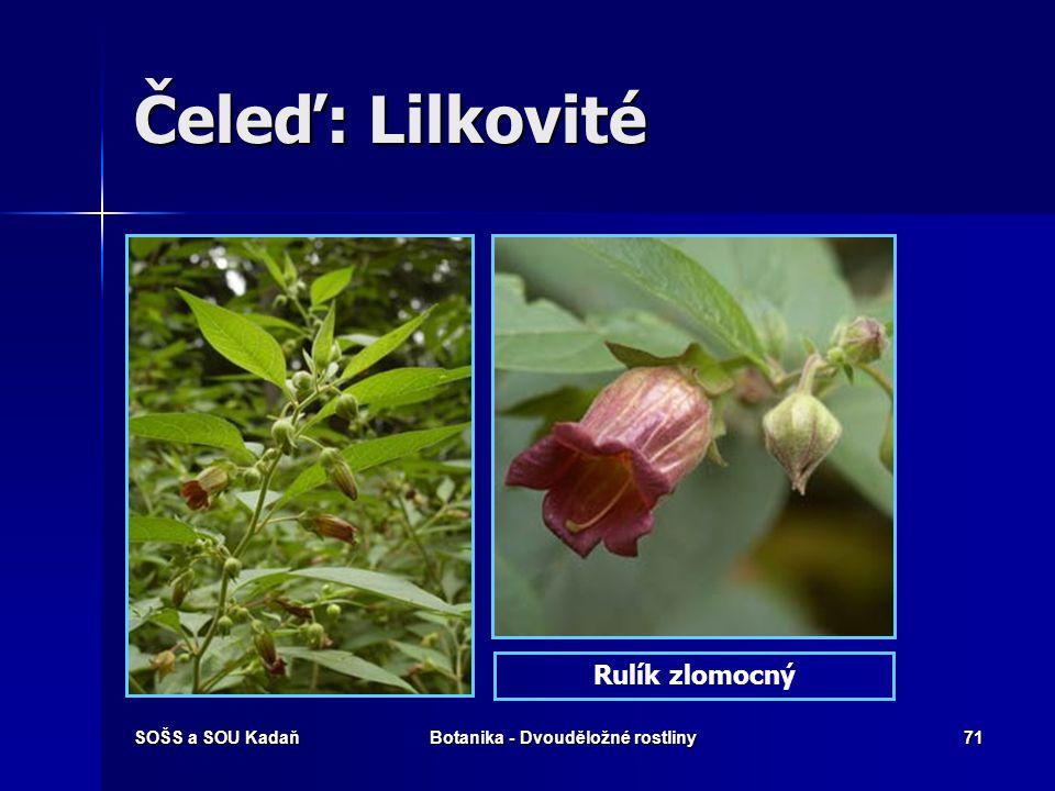 SOŠS a SOU KadaňBotanika - Dvouděložné rostliny70 Čeleď: Lilkovité Lilek potměchuť