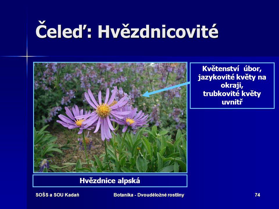 SOŠS a SOU KadaňBotanika - Dvouděložné rostliny73 Čeleď: Hvězdnicovité Hvězdnicovité jsou jednou z nejpočetnějších čeledí vyšších rostlin, obsahují př