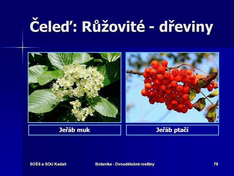SOŠS a SOU KadaňBotanika - Dvouděložné rostliny78 Čeleď: Růžovité Vytrvalé byliny až keře, jen zřídka letničky. Vytrvalé byliny až keře, jen zřídka le