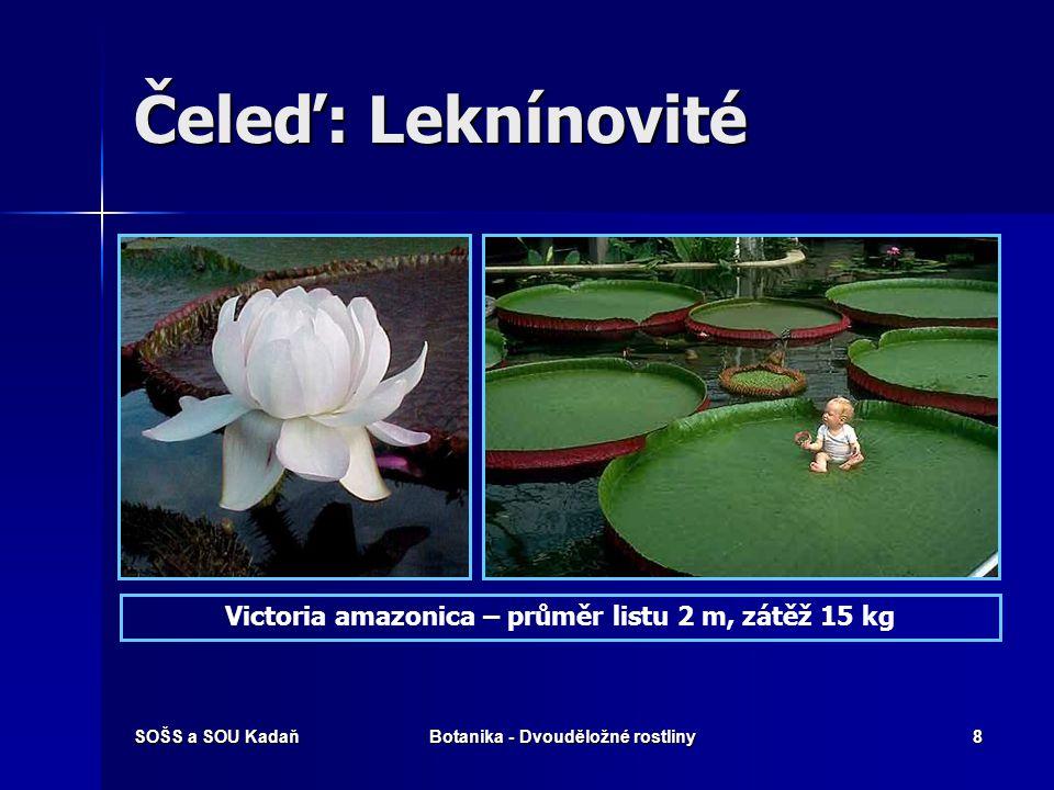 SOŠS a SOU KadaňBotanika - Dvouděložné rostliny8 Čeleď: Leknínovité Victoria amazonica – průměr listu 2 m, zátěž 15 kg