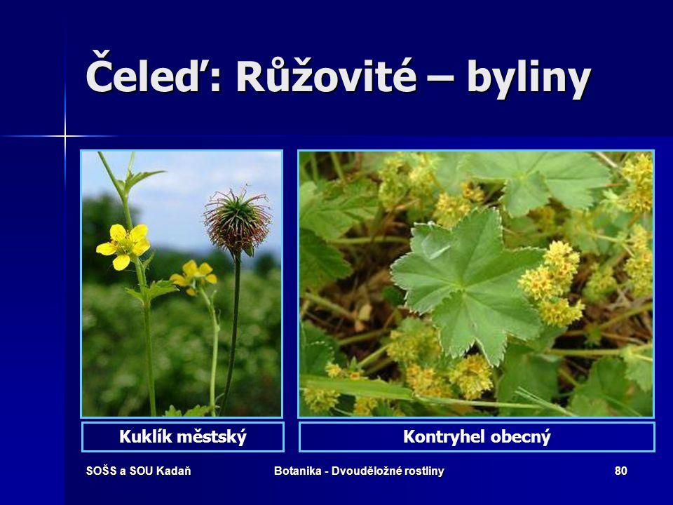 SOŠS a SOU KadaňBotanika - Dvouděložné rostliny79 Čeleď: Růžovité - dřeviny Jeřáb mukJeřáb ptačí