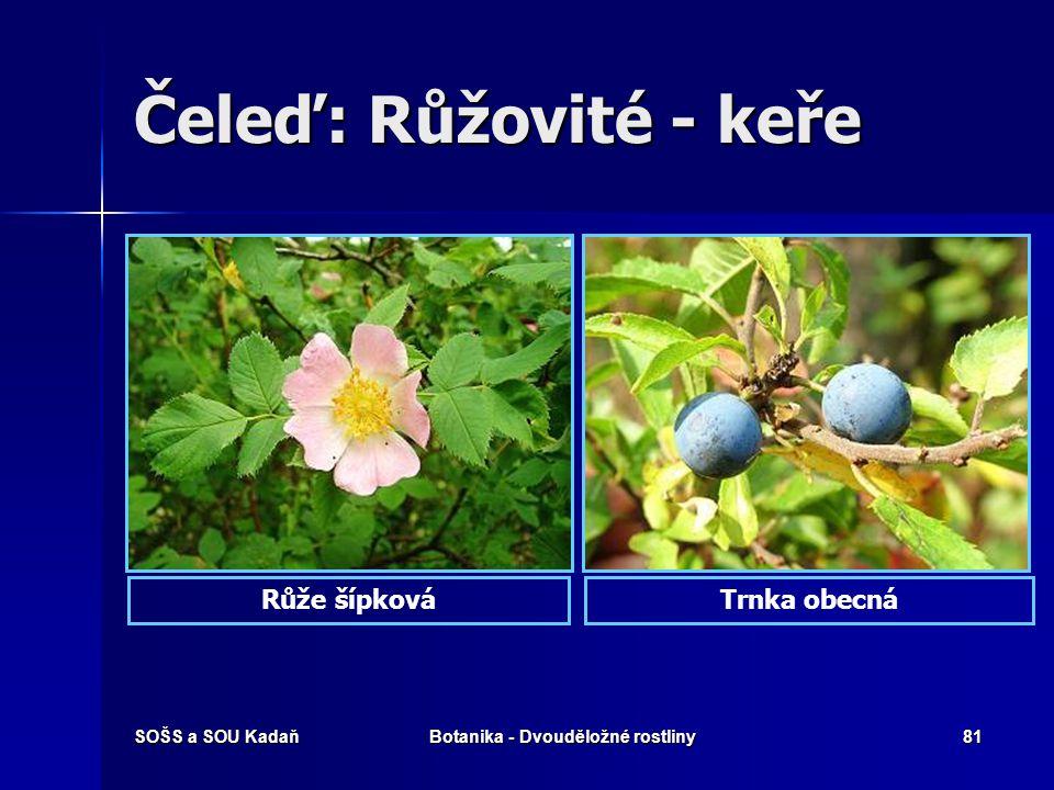 SOŠS a SOU KadaňBotanika - Dvouděložné rostliny80 Čeleď: Růžovité – byliny Kuklík městskýKontryhel obecný