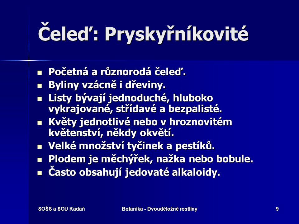 SOŠS a SOU KadaňBotanika - Dvouděložné rostliny9 Čeleď: Pryskyřníkovité Početná a různorodá čeleď.