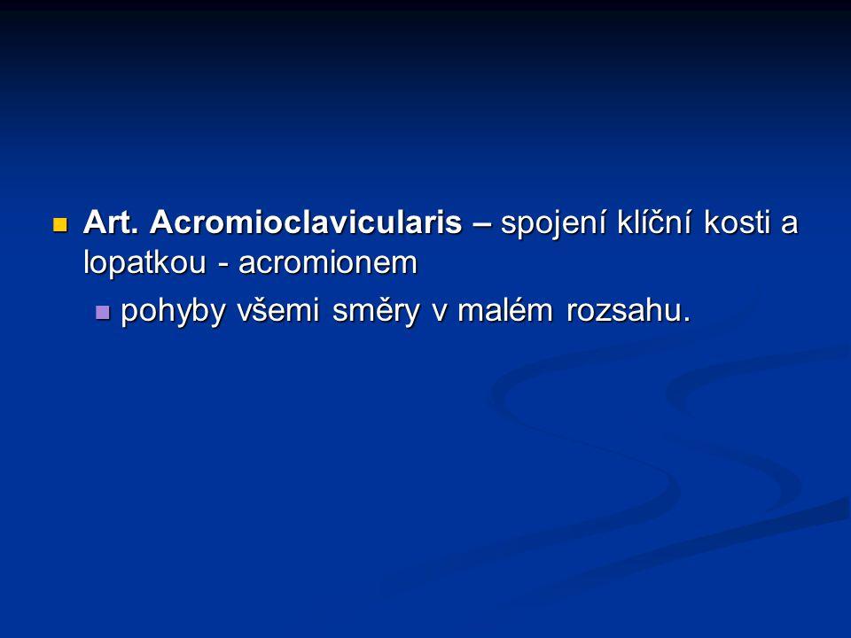 Art. Acromioclavicularis – spojení klíční kosti a lopatkou - acromionem Art. Acromioclavicularis – spojení klíční kosti a lopatkou - acromionem pohyby