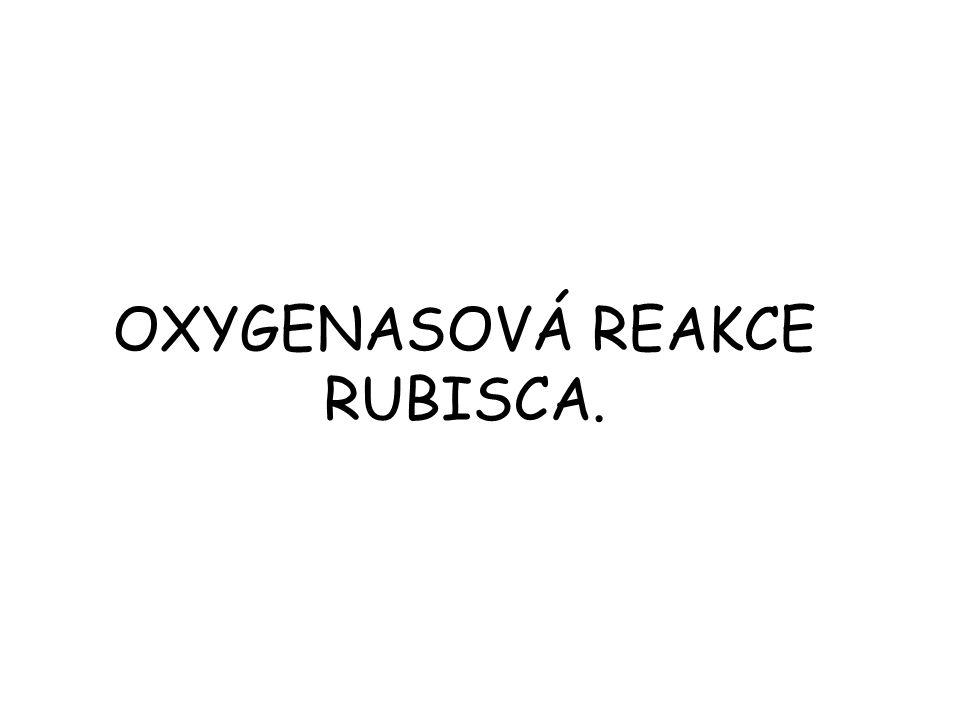 OXYGENASOVÁ REAKCE RUBISCA.