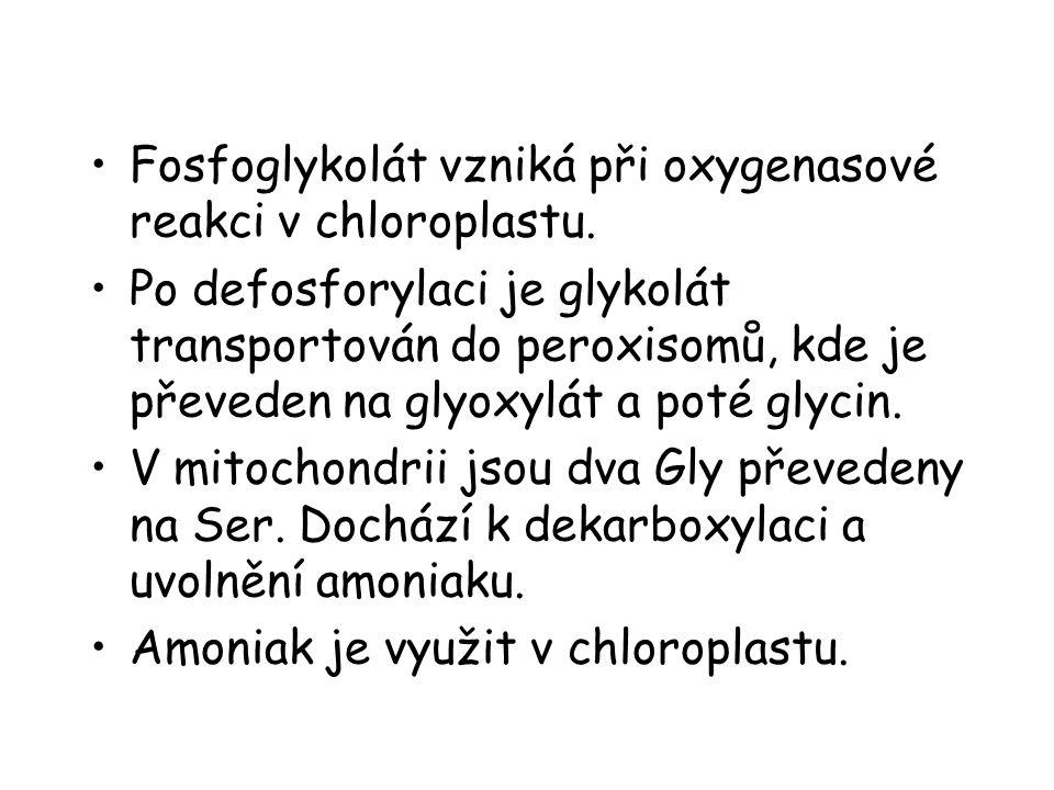 Fosfoglykolát vzniká při oxygenasové reakci v chloroplastu. Po defosforylaci je glykolát transportován do peroxisomů, kde je převeden na glyoxylát a p