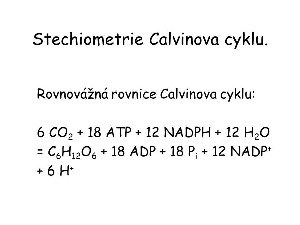 Stechiometrie Calvinova cyklu. Rovnovážná rovnice Calvinova cyklu: 6 CO 2 + 18 ATP + 12 NADPH + 12 H 2 O = C 6 H 12 O 6 + 18 ADP + 18 P i + 12 NADP +