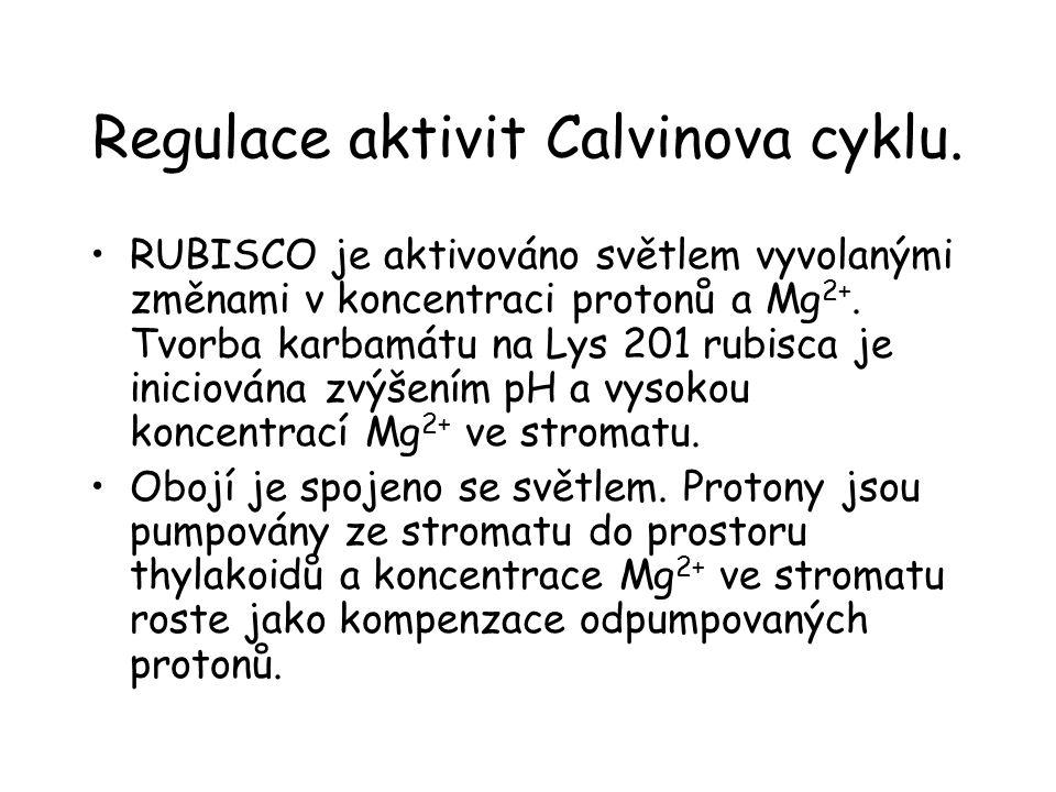 Regulace aktivit Calvinova cyklu. RUBISCO je aktivováno světlem vyvolanými změnami v koncentraci protonů a Mg 2+. Tvorba karbamátu na Lys 201 rubisca