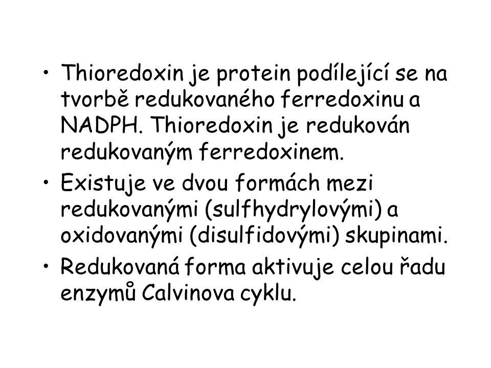 Thioredoxin je protein podílející se na tvorbě redukovaného ferredoxinu a NADPH. Thioredoxin je redukován redukovaným ferredoxinem. Existuje ve dvou f