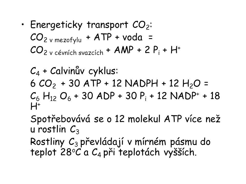 Energeticky transport CO 2 : CO 2 v mezofylu + ATP + voda = CO 2 v cévních svazcích + AMP + 2 P i + H + C 4 + Calvinův cyklus: 6 CO 2 + 30 ATP + 12 NA