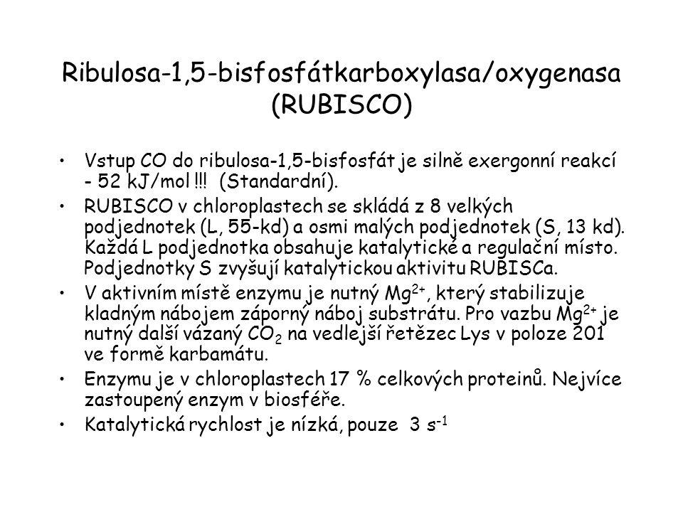 Ribulosa-1,5-bisfosfátkarboxylasa/oxygenasa (RUBISCO) Vstup CO do ribulosa-1,5-bisfosfát je silně exergonní reakcí - 52 kJ/mol !!! (Standardní). RUBIS