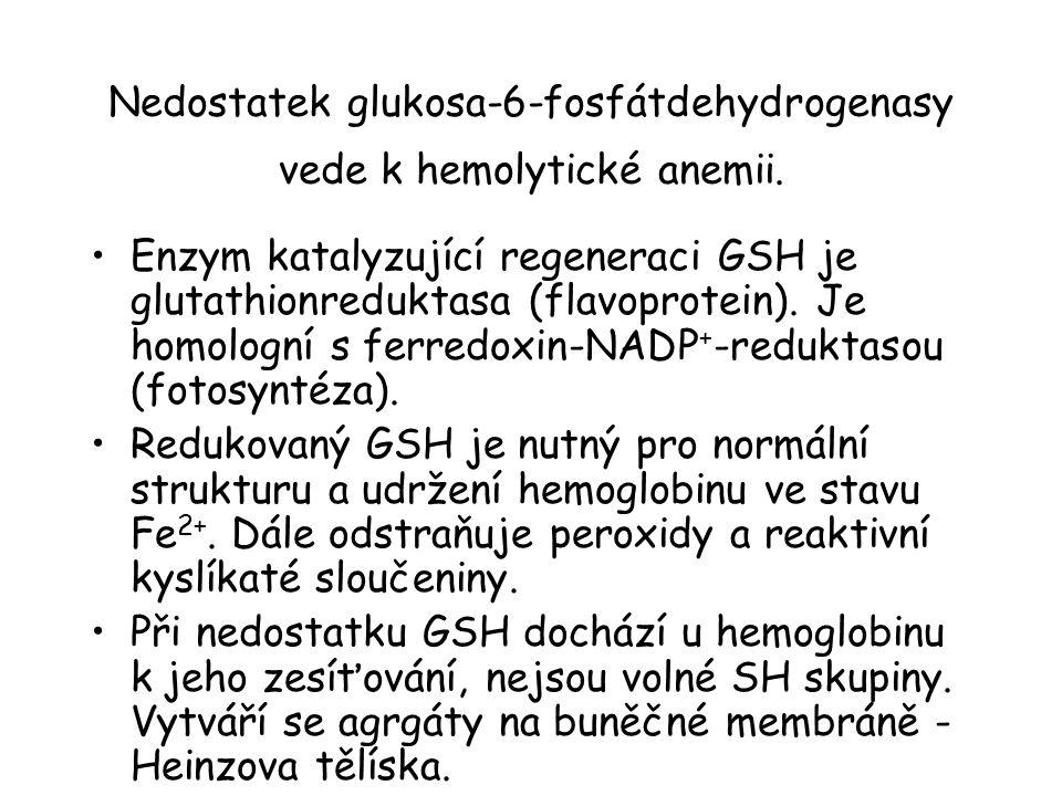 Nedostatek glukosa-6-fosfátdehydrogenasy vede k hemolytické anemii. Enzym katalyzující regeneraci GSH je glutathionreduktasa (flavoprotein). Je homolo