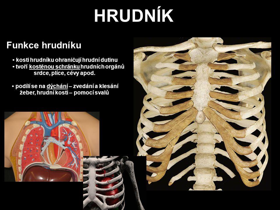 Funkce hrudníku kosti hrudníku ohraničují hrudní dutinu tvoří kostěnou schránku hrudních orgánů srdce, plíce, cévy apod. podílí se na dýchání – zvedán
