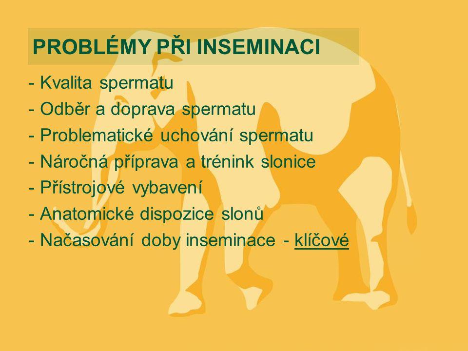 - Kvalita spermatu - Odběr a doprava spermatu - Problematické uchování spermatu - Náročná příprava a trénink slonice - Přístrojové vybavení - Anatomické dispozice slonů - Načasování doby inseminace - klíčové PROBLÉMY PŘI INSEMINACI