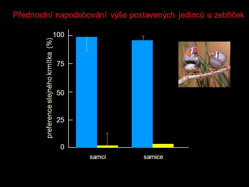 0 25 50 75 100 preference stejného krmítka (%) samcisamice Přednostní napodobování výše postavených jedinců u zebřiček