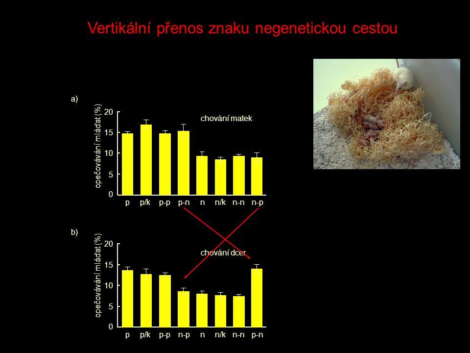 0 5 10 15 20 opečovávání mláďat (%) pp/kp-pp-nnn/kn-nn-p 0 5 10 15 20 opečovávání mláďat (%) pp/kp-pn-pnn/kn-np-n chování matek chování dcer a) b) Vertikální přenos znaku negenetickou cestou