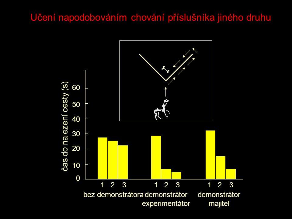 0 1010 3030 5050 bez demonstrátora 1 čas do nalezení cesty (s) 2020 4040 6060 23123123 demonstrátor experimentátor demonstrátor majitel Učení napodobováním chování příslušníka jiného druhu