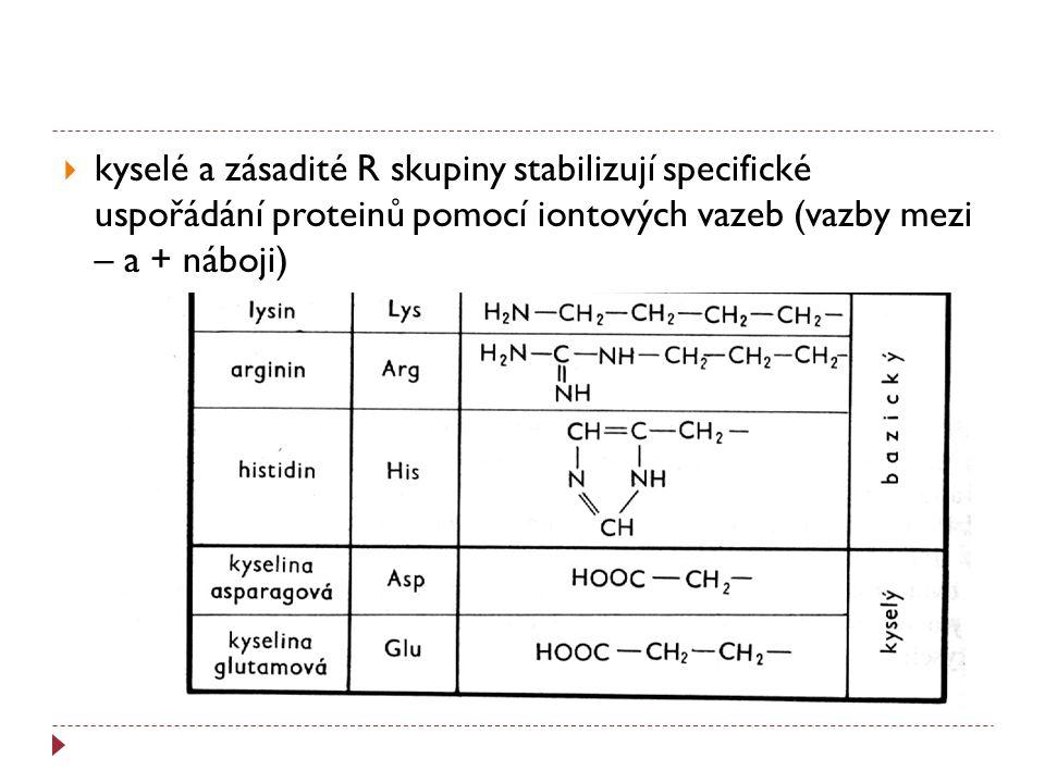  kyselé a zásadité R skupiny stabilizují specifické uspořádání proteinů pomocí iontových vazeb (vazby mezi – a + náboji)