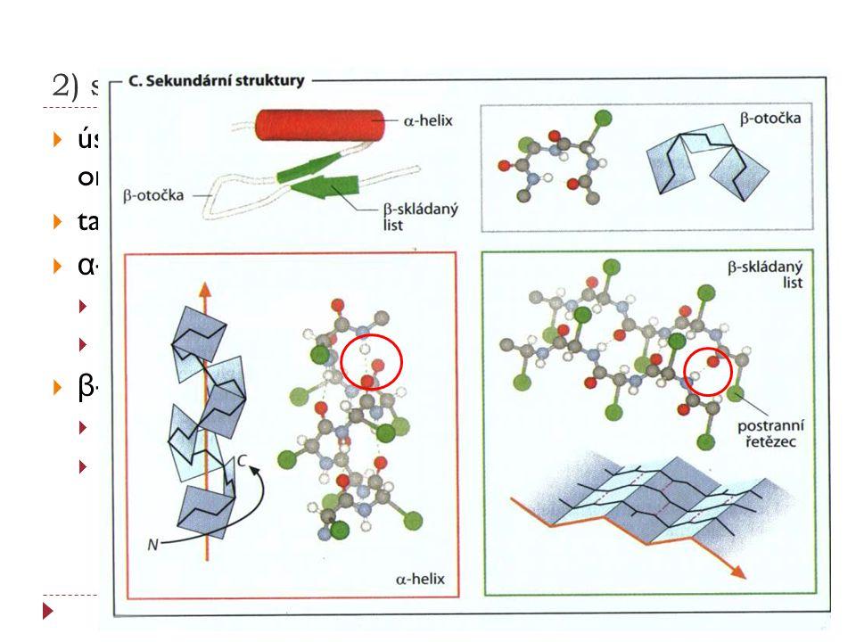 2) sekundární strukrura  úseky peptidového řetězce s definovanou prostorovou orientací (konformace)  tato konformace je stabilizovaná vodíkovými můs