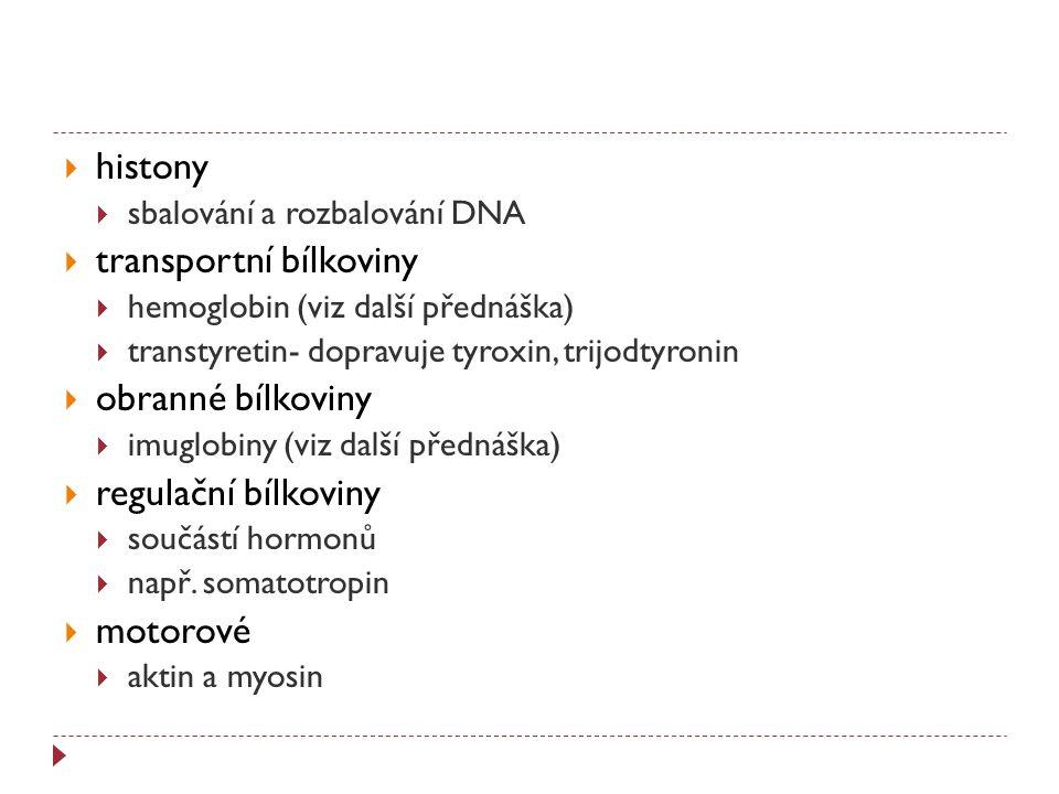  histony  sbalování a rozbalování DNA  transportní bílkoviny  hemoglobin (viz další přednáška)  transtyretin- dopravuje tyroxin, trijodtyronin 